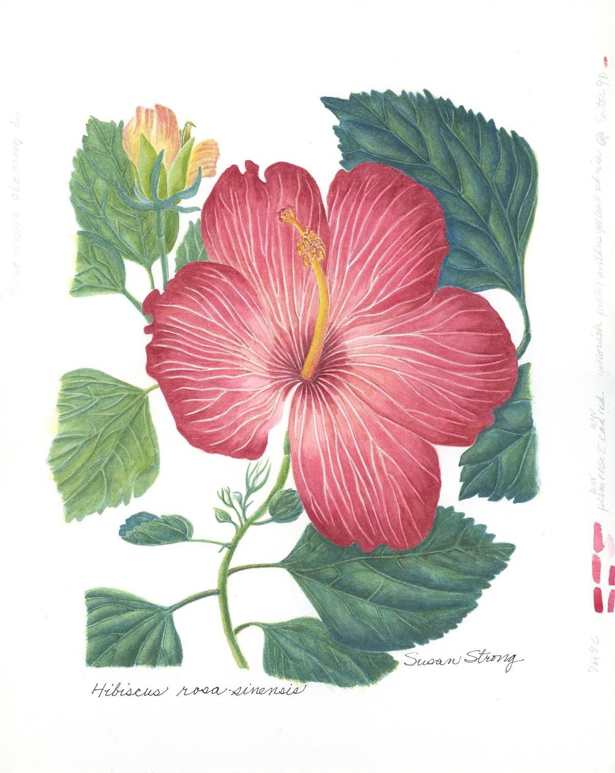 Hibiscus 4-18 copy